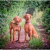 Joe and Sophie