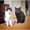 Roo and Nico