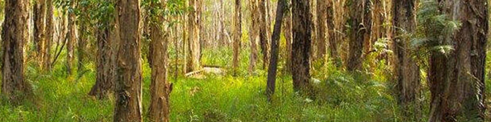 Coombabah – Gold Coast Australia